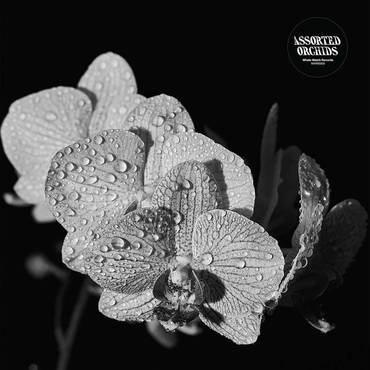 Assorted Orchids LP - Pre -Order